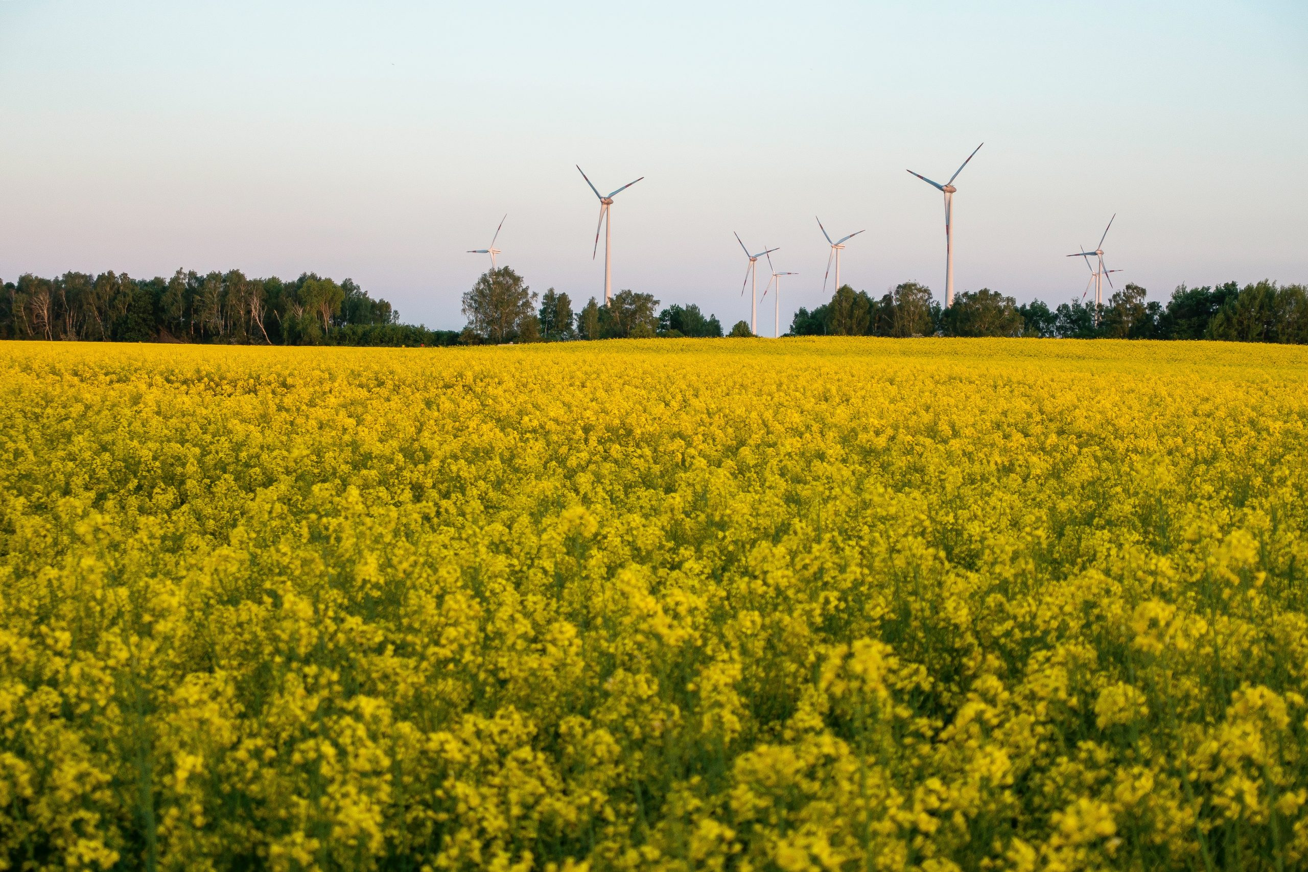 Renewable energy blackspots: why are renewables less prevalent in urban areas?