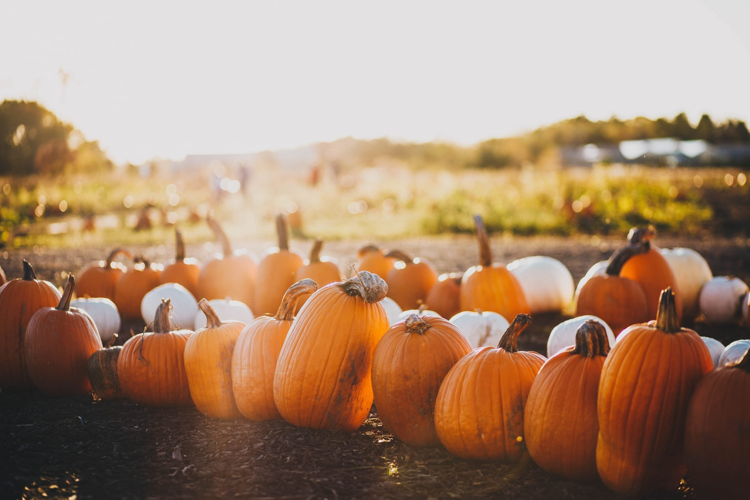 7 tips for a spooky sustainable Halloween